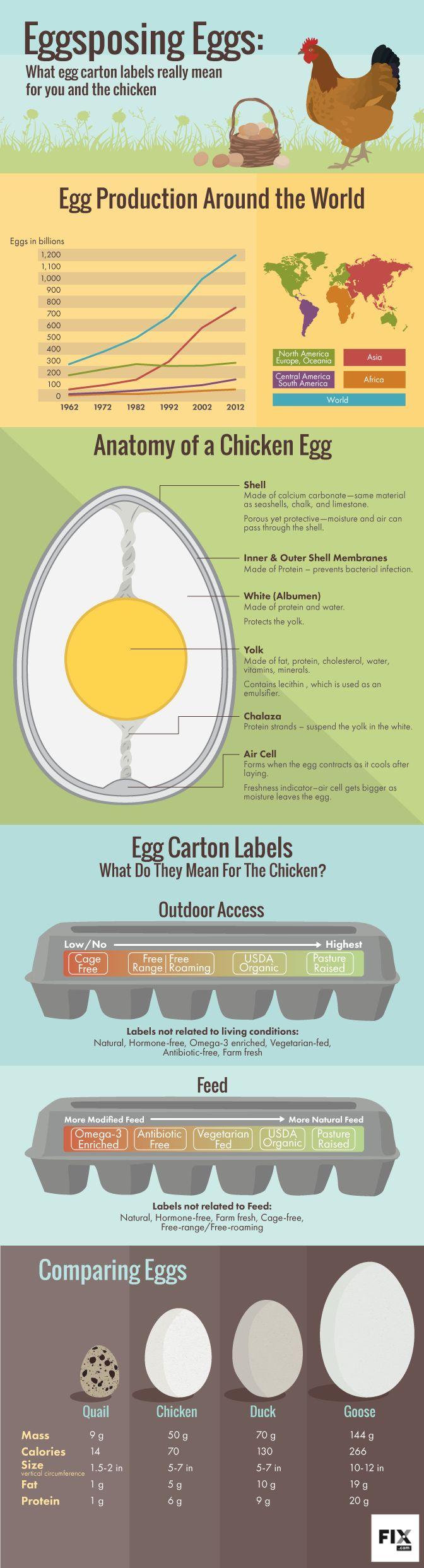 Přes 1000 nápadů na téma Large Egg Nutrition na Pinterestu