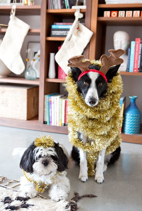 how will you decorate your dogs this holiday season?