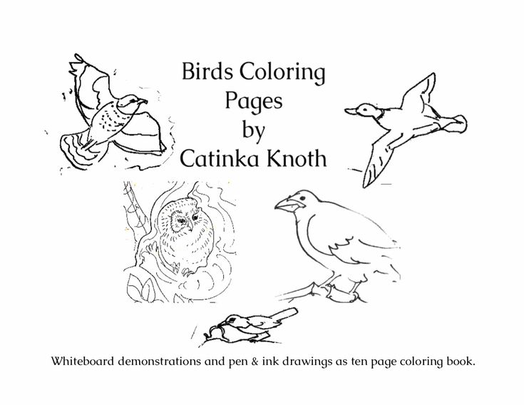 Birds Coloring 10 Page Pdf Book Hummingbirds Orioles Herons Ducks Owls Eagles Finches Catinka Knoth By