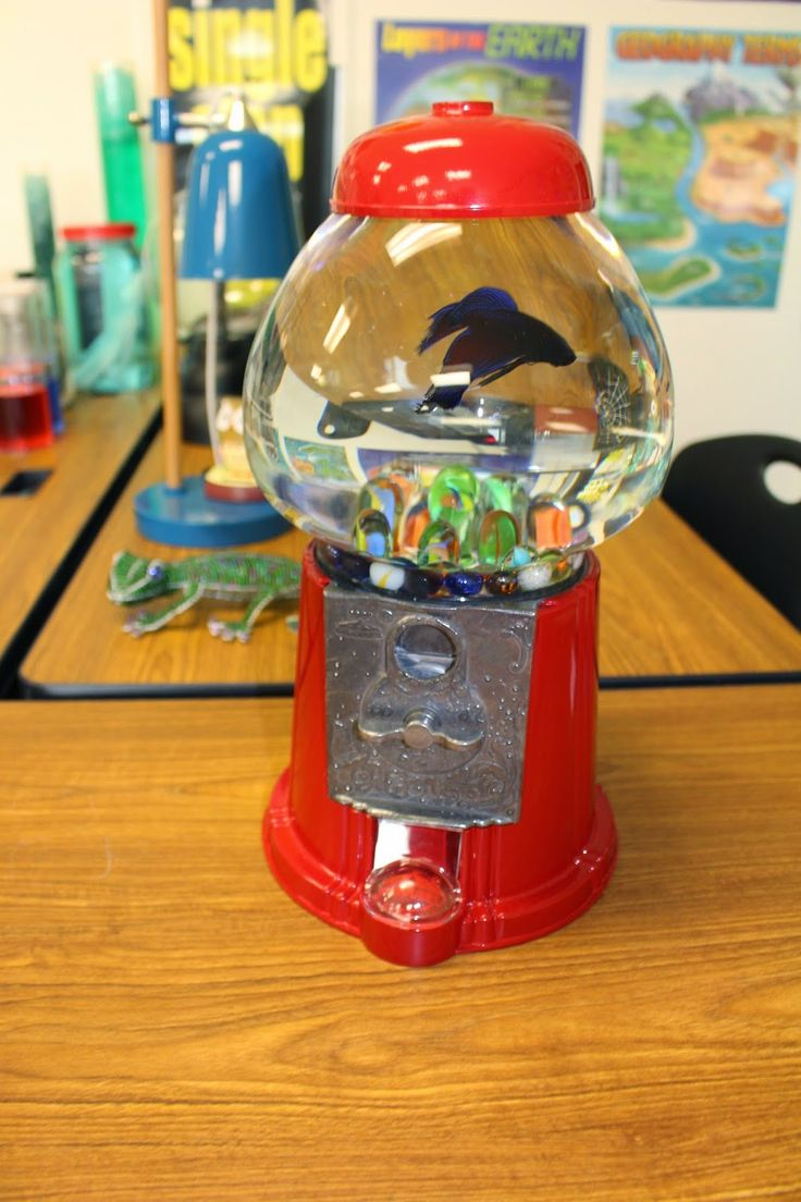 fishbowl for a beta fish made from an old gumball machine!