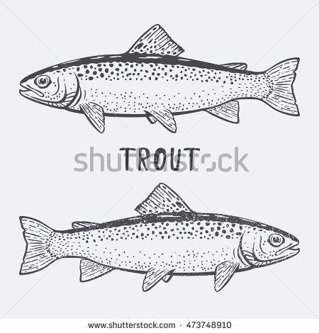 Trout vector illustration