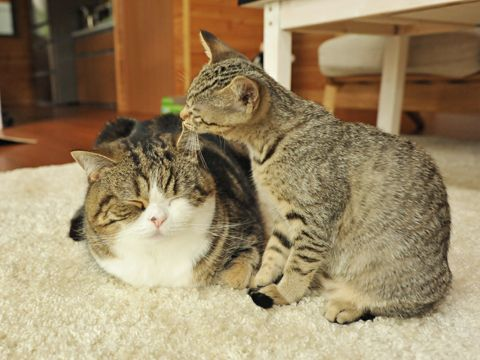 Hana is grooming Maru