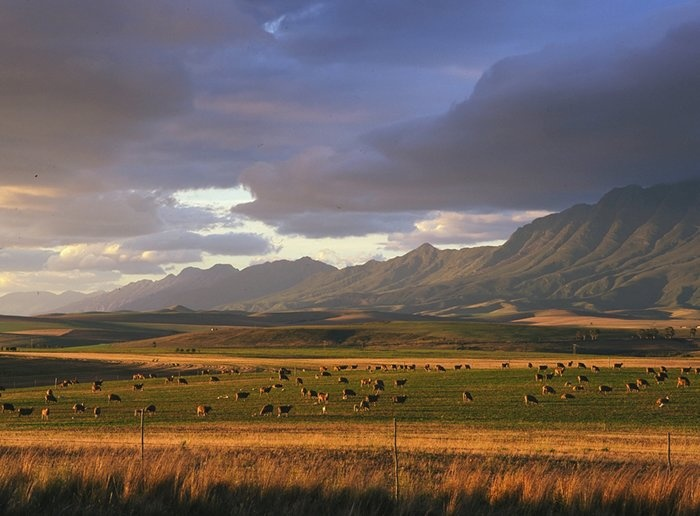 overberg scenery - Google Search