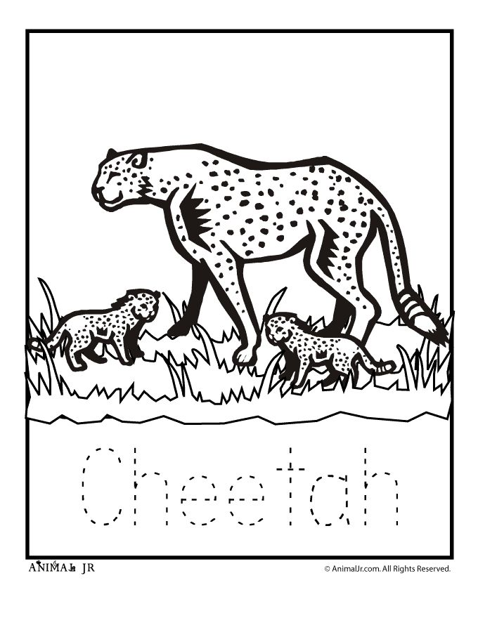 Zoo Animal Coloring Pages Babies Cheetah Classroom Jr