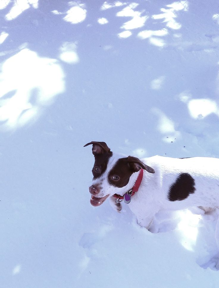 Stella's sense of snow