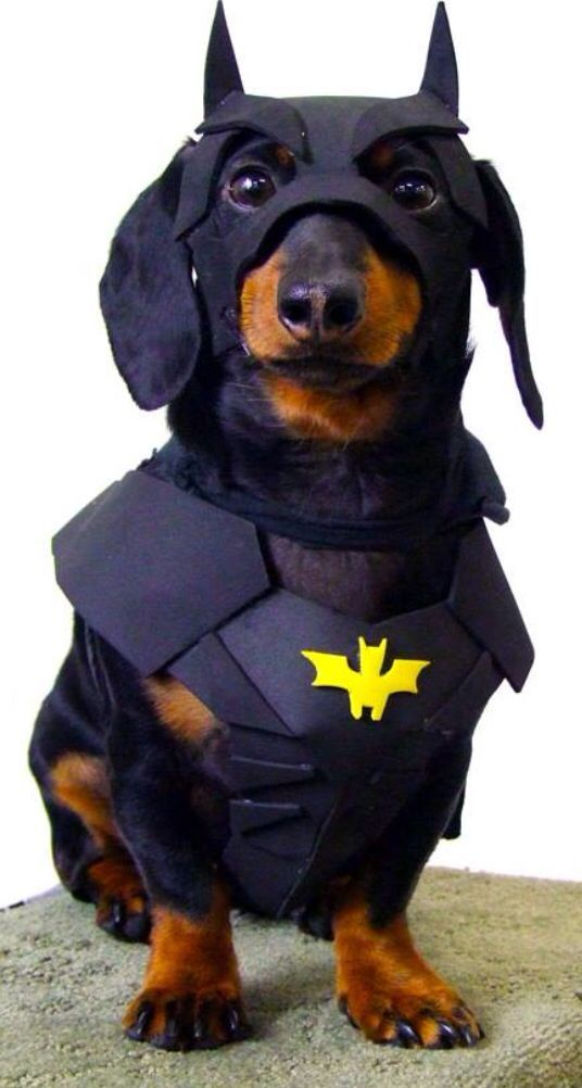 Cute Dog Halloween Costumes