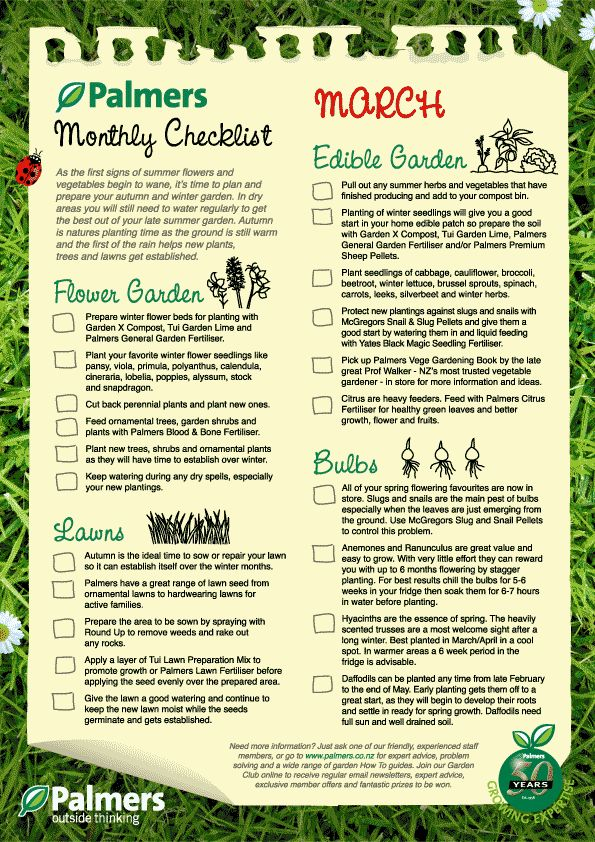 Charming January Gardening NZ Tips   Palmers Garden Centre