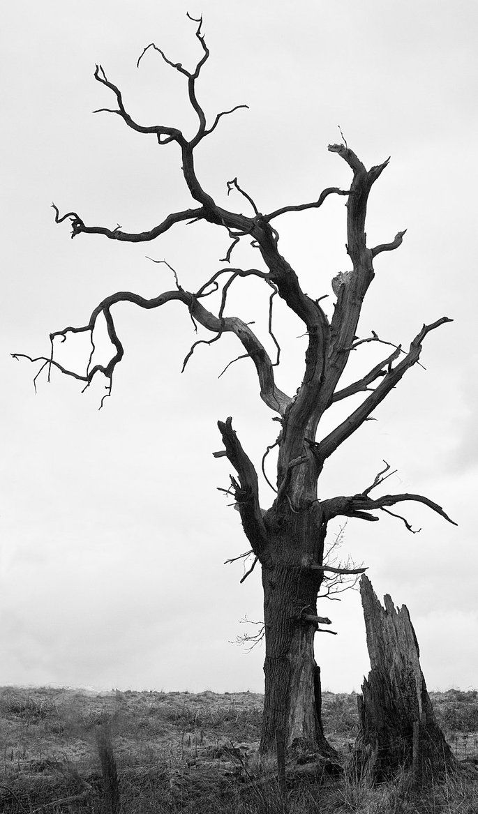 creepy bird in tree silhouette Creepy Tree Haunted