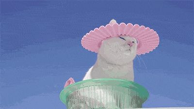 gif-chat-chapeau-soleil