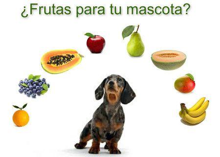 Frutas y verduras que puede comer tu perro o gato http://www.cuidandotumascota.com/blog/posts/frutas-y-verduras-que-pueden-comer-tu-perro-o-gato