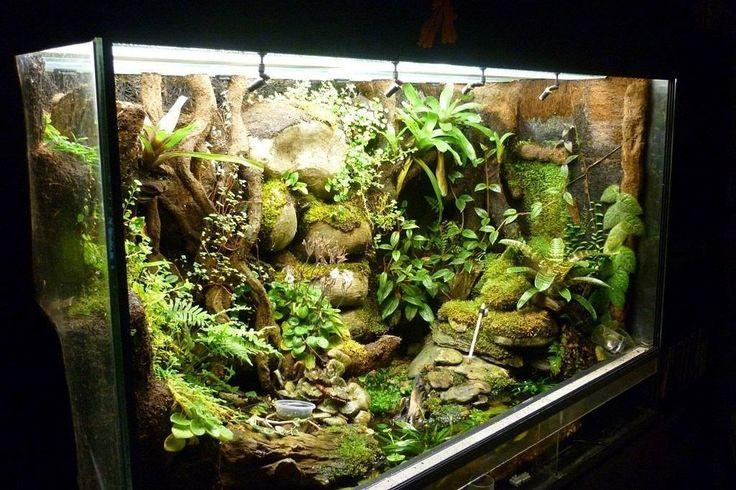 15 best terrarium images on pinterest vivarium fish - Begonia argentata ...
