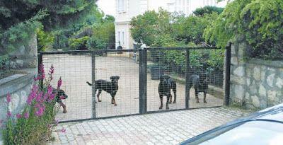 Κοζάνη:Δέκα ροτβάιλερ είχε ο ιδιοκτήτης των σκύλων που δολοφόνησαν τον 5χρονο..