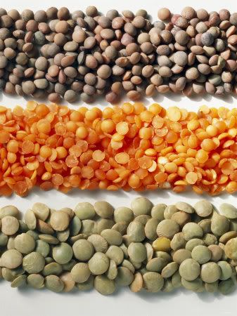 Lentils, a cheap and versatile protein source