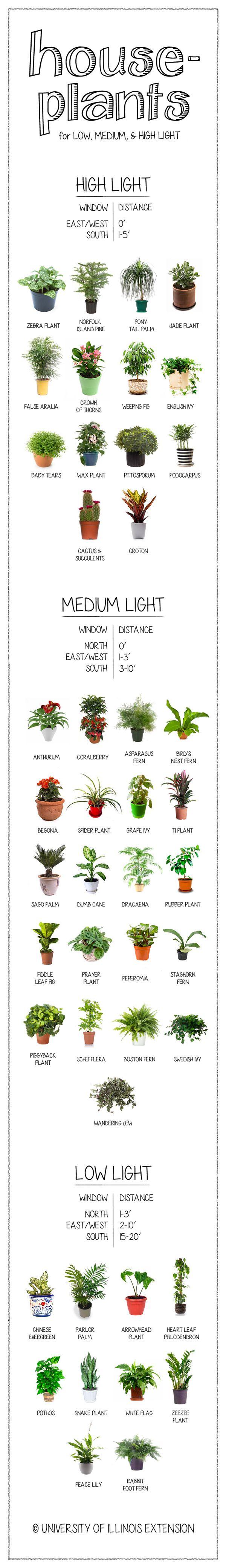 Houseplants for Low, Medium, & Bright Light
