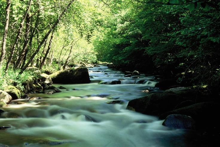 La Cure, rivière nivernaise