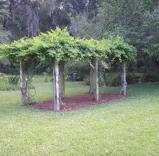 how to build a grape arbor    This reminds me so much of the grape arbor outside my Grandma and Grandpa's house in South Carolina when I was growing up.  Delicious fat white concord grapes!