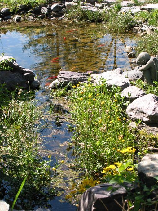 Natural Looking Backyard Ponds : Really love this naturallooking goldfish pond Goldfish Pond
