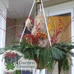 Winter hanging basket, ready for hanging.