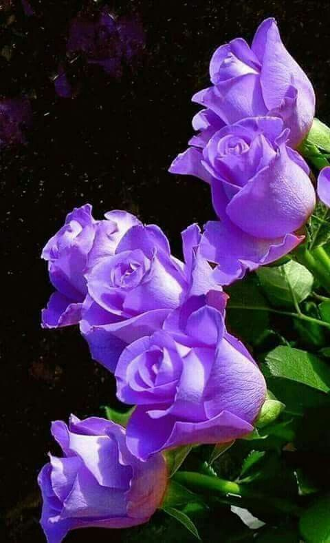 Beautiful Purple Flowers! Purple was My Grandma Eloise' s Favorite Color. I always think of her, especially when I see Purple