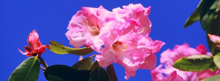 Facebook cover photo: flowers
