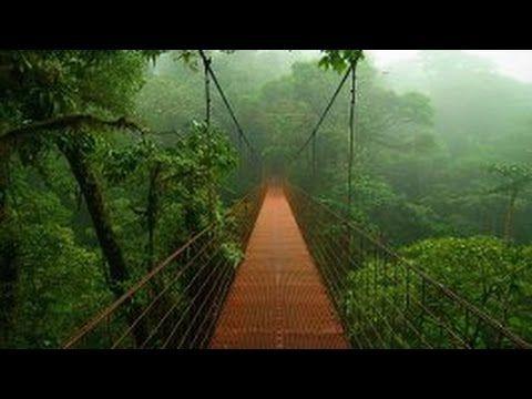 Дикая природа. Джунгли - тропический лес.  Центральная Америка. Документ...