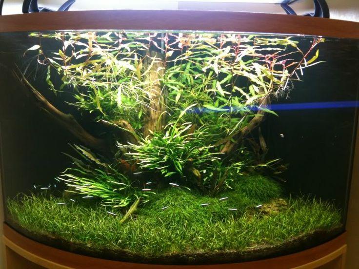 How to scape a corner aquarium??? - Aquascaping - Aquatic Plant Central