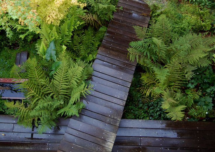 Boardwalks As Paths Above A Damp Garden. This Garden Was Designed For Young  San Francisco Owners On A Budget. Won ASLA Award. Design By Bionic Of San  ...