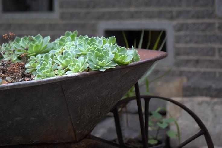 Succulents Wheelbarrow Garden Garden Design
