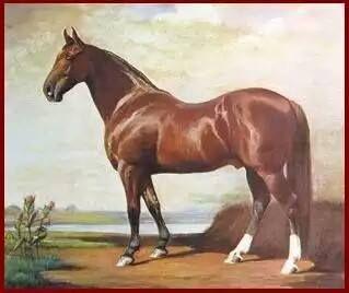 Hamiltonian- the fountain stallion of the Standardbred horse.