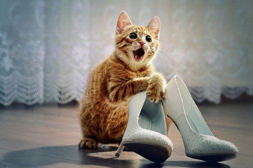 веселый котик