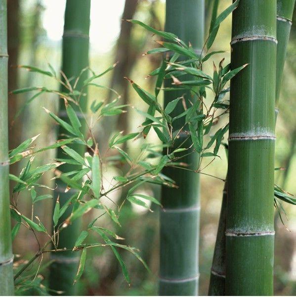 (33,28€/1qm) Statische Fensterfolie JOY static Dekorfolie Bamboo Bambus Meterwar   Möbel & Wohnen, Rollos, Gardinen & Vorhänge, Fensterfolien   eBay!