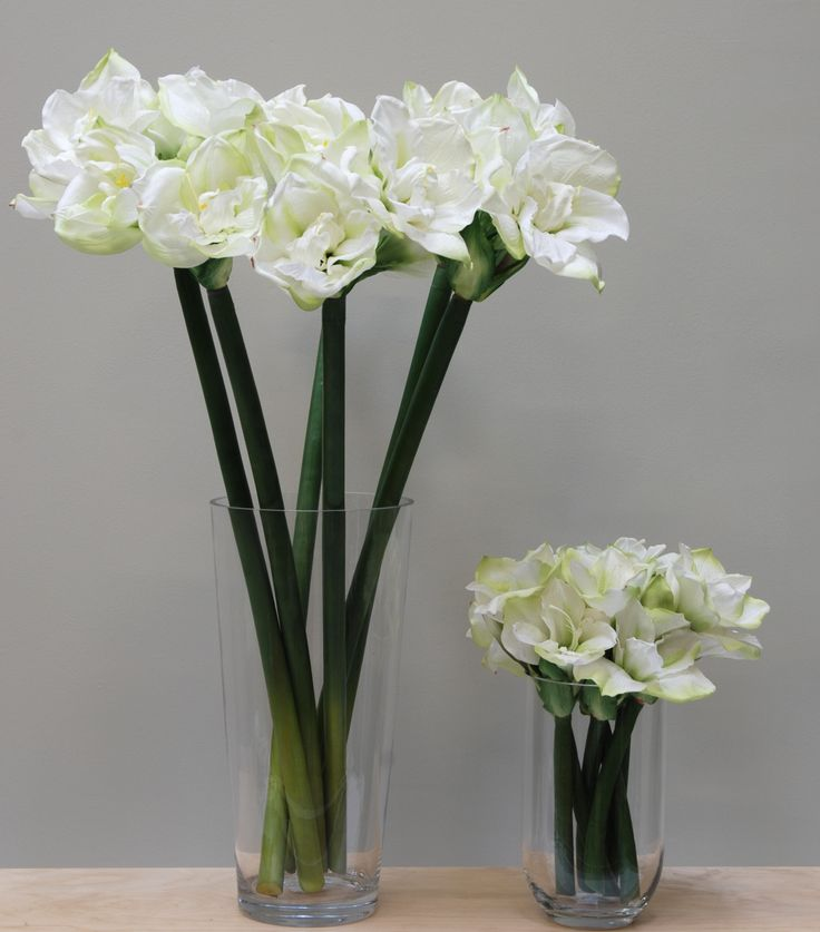 17 best images about artificial flower plant for Planter des amaryllis