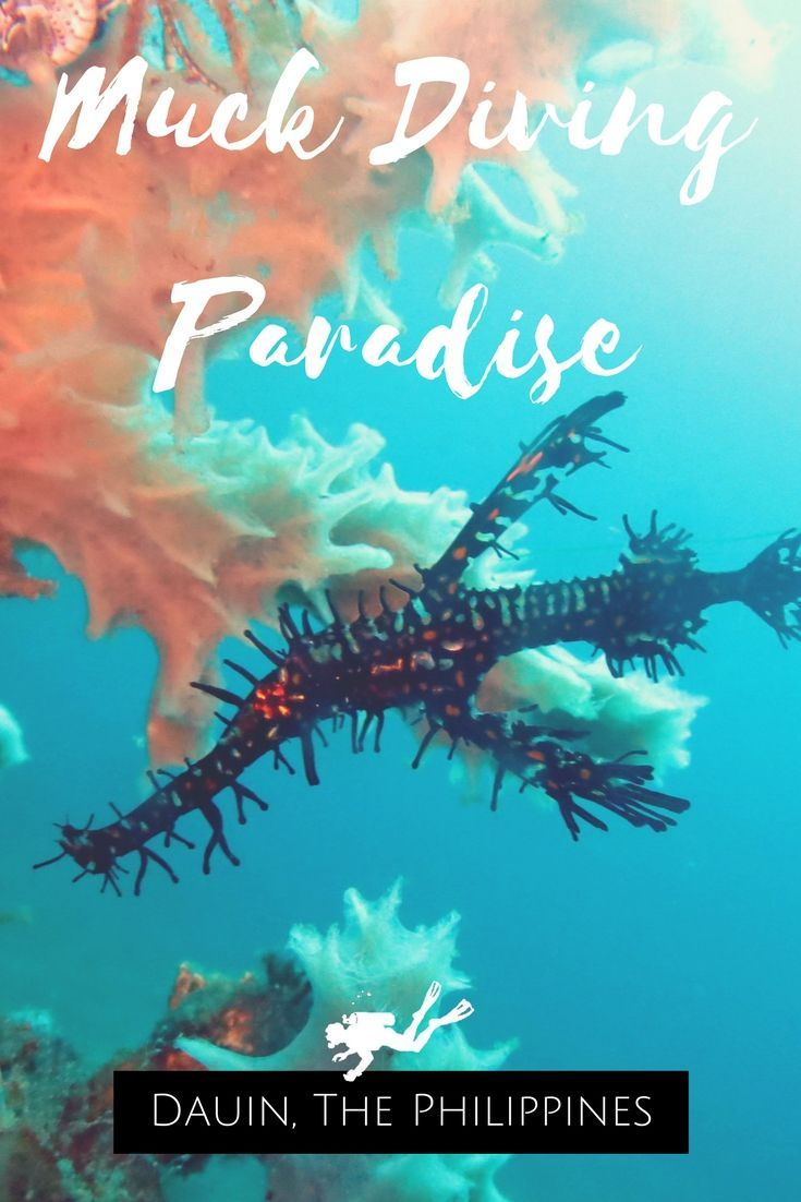 Muck Diving Paradise in Dauin, in the Philippines – Scuba Diving – World Adventure Divers – Read more on https://worldadventuredivers.com/2015/02/01/muck-diving-paradise-in-dauin-philippines/