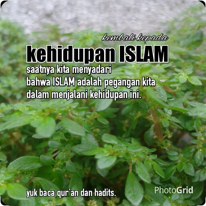 Mari hidup dengan islam sebagai pedoman.