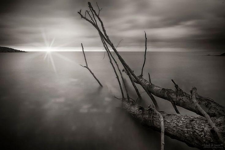tree stranded on the beach by dlddanilo