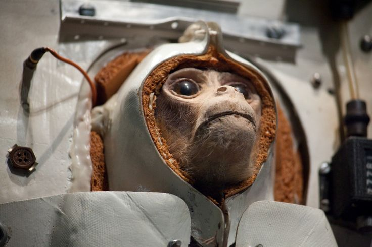Animal testing a scientist experiments on