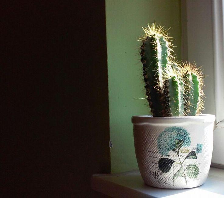 Cactus   Biljana Vranješ
