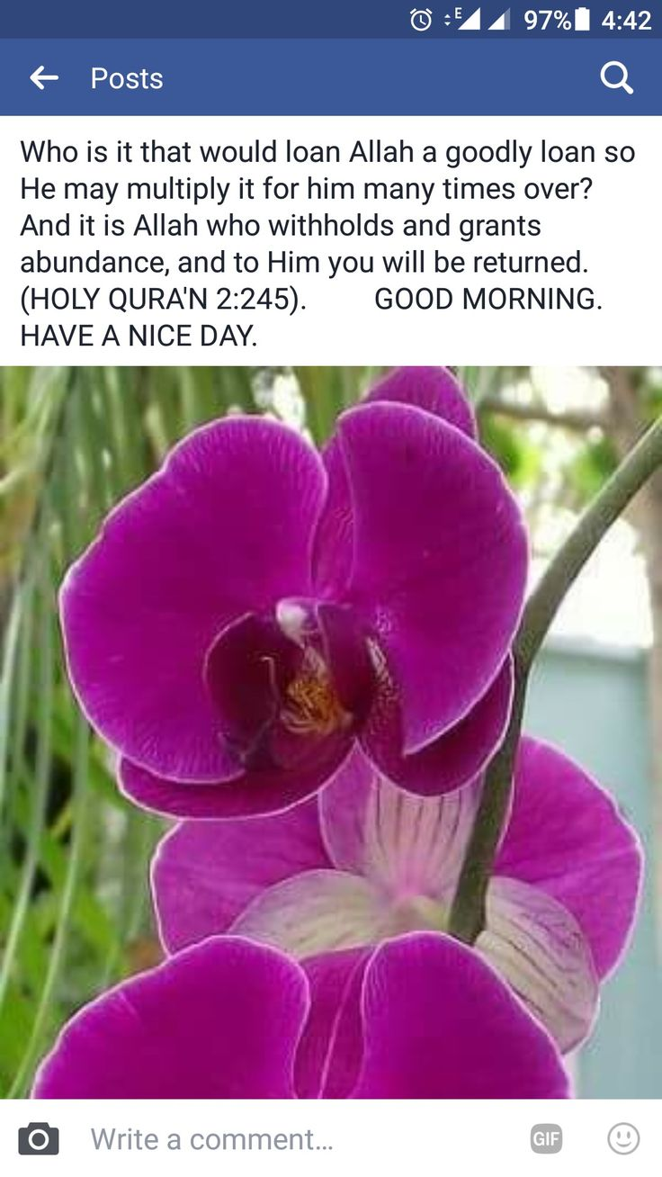 A verse from the holy QURA'N.