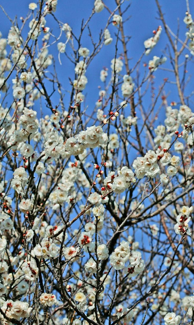 March 25, 2012  Japan