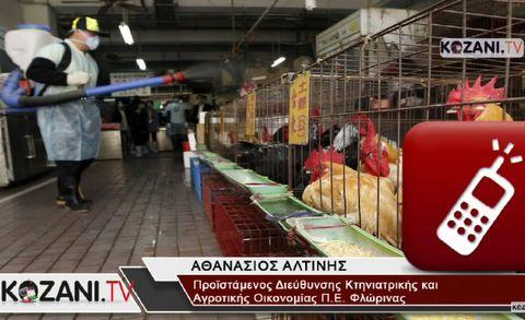 Η Γρίπη των Πτηνών στη Δυτική Μακεδονία! Επιβεβαιωμένο κρούσμα σε σταχτόχηνα στη λίμνη Πρεσπών. Τι λένε οι ειδικοί (video)