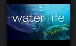 L'importance de l'eau sur Terre