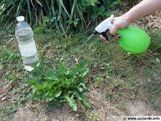 Pulvérisation de vinaigre blanc contre les mauvaises herbes