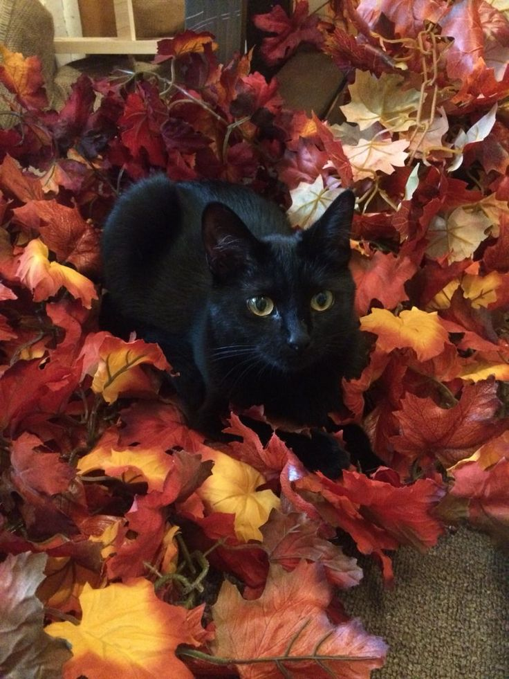 Tobi lovell says mummy will love All these leaves (With
