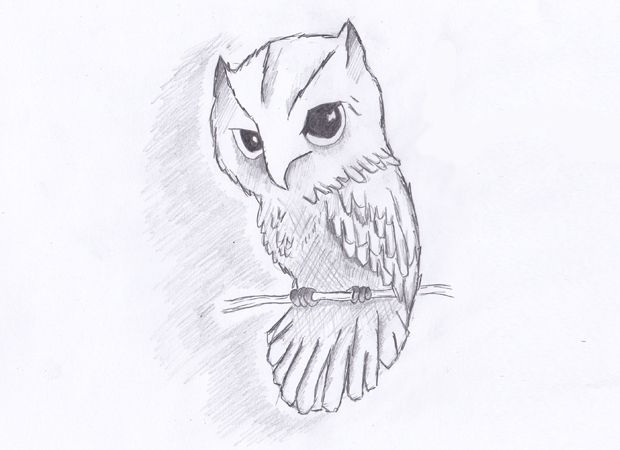 how to draw an owl in 7 simple steps step by step lesson