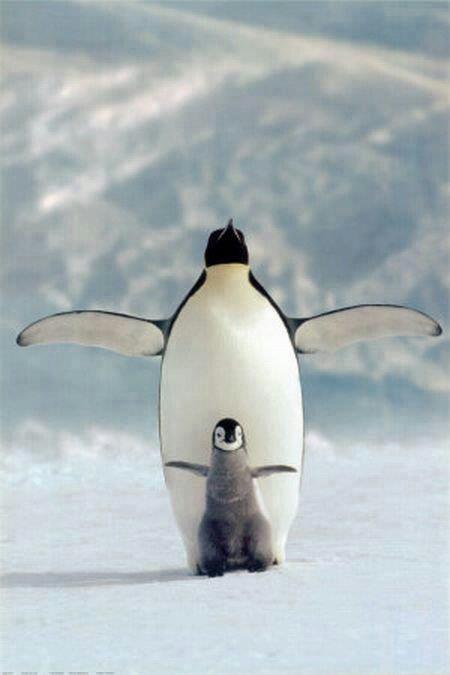 Los pinguinos son aves marinas