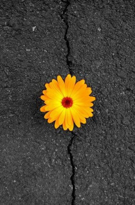 this flower creates a focal point because this is the most colourful out of the whole image, and the ground is very dull and dark.