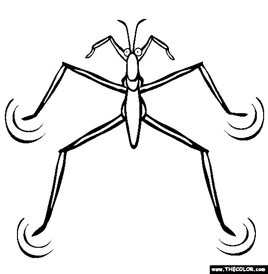 bug coloring pages crazy boys