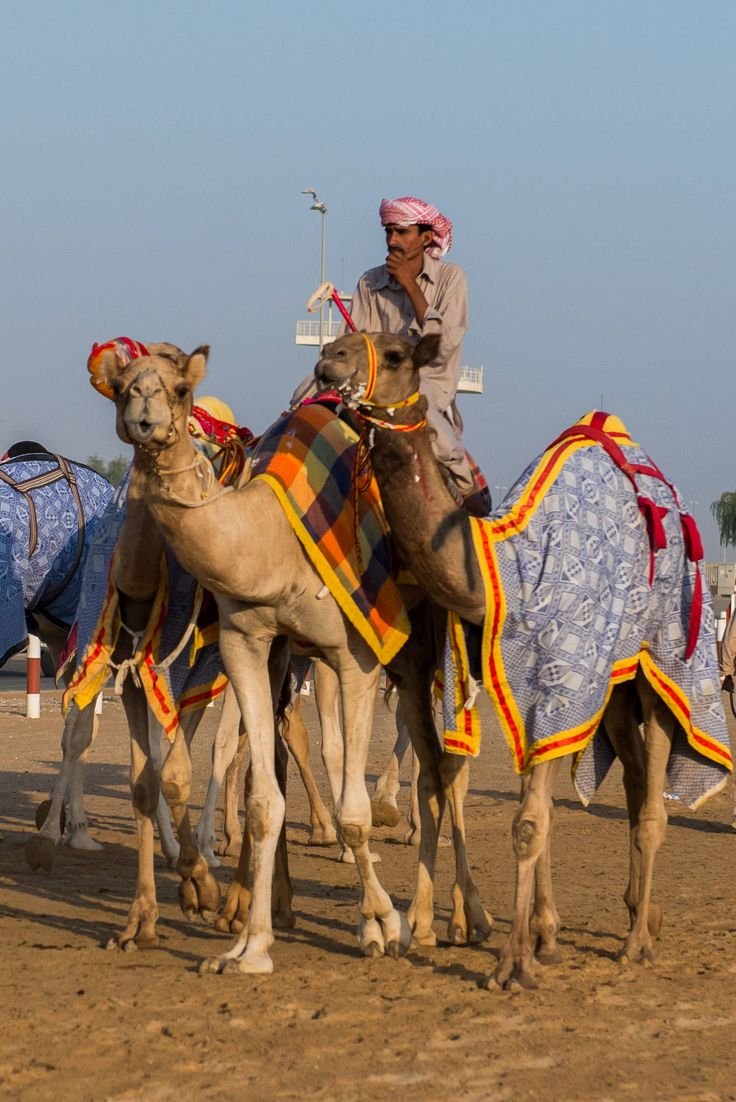 Unexpected Dubai: Camel races, textile market, spice and gold souk, cultural lunch and progressive dinner | The Food Pornographer