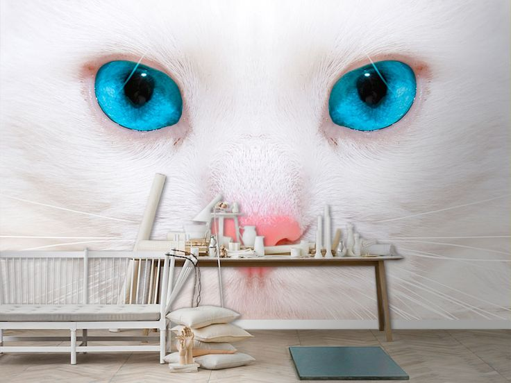 Cat With Blue Eyes Wall Murals - Moon Wall Stickers