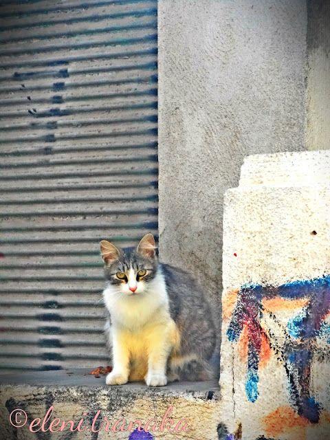 Ελένη Τράνακα: Γάτες / Cats